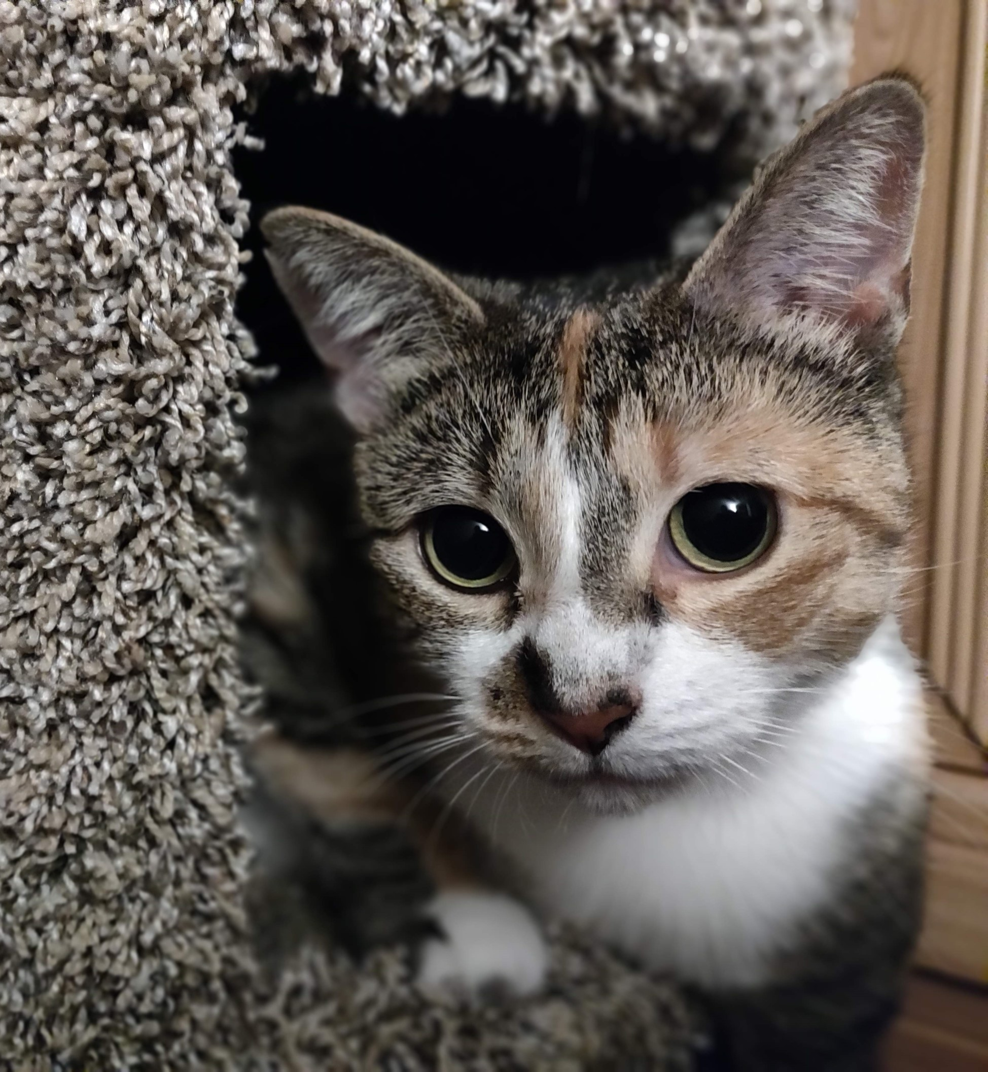 Taki K. Kitty, Ph.D
